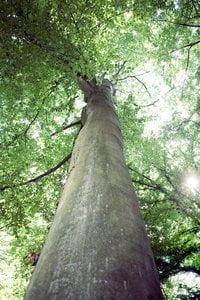 A Tree Which Tweets, befriend it on Facebook