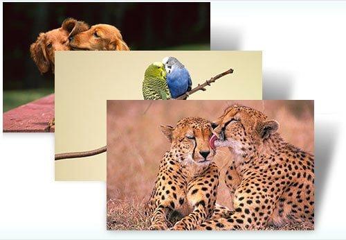 Animal Affection Theme for Windows 7