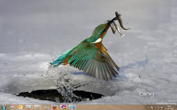 Best of Bing Kingfisher