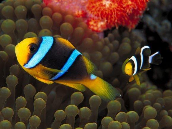Free Download Underwater Wallpaper Pack Fluorescent fish