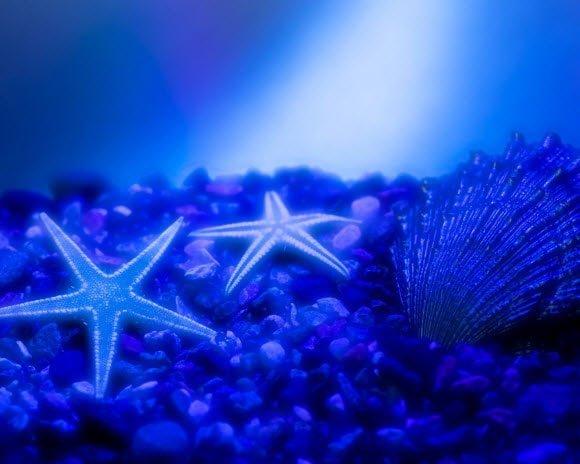 Free Download Underwater Wallpaper Pack Star Fish
