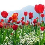 Free download a pack of Mixed Wallpapers [80+ Wallpapers] Flowers